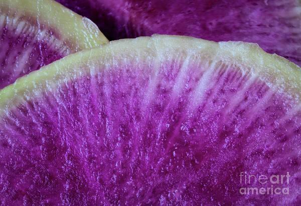 Wall Art - Photograph - Watermelon Radish Macro by Elisabeth Lucas