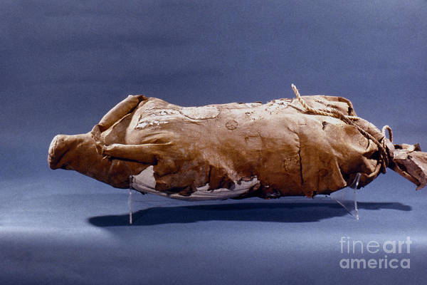 Photograph - Waterskin by Granger