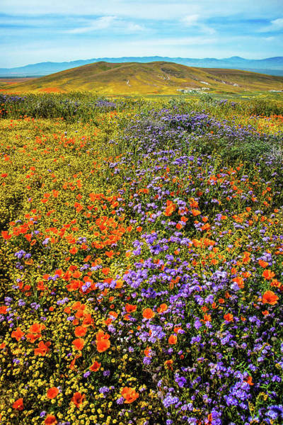 Photograph - Waves Of Color - Superbloom 2019 by Lynn Bauer