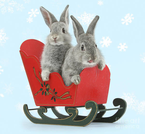 Photograph - Way Hay Bunnies by Warren Photographic