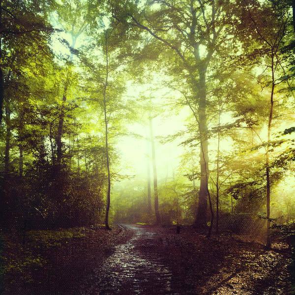 Photograph - Way Of Light by Dirk Wuestenhagen