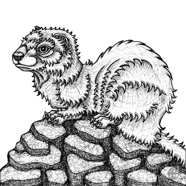 Drawing - Weasel by Amy E Fraser