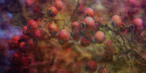 Photograph - Weathered Berries 5928 Idp_2 by Steven Ward
