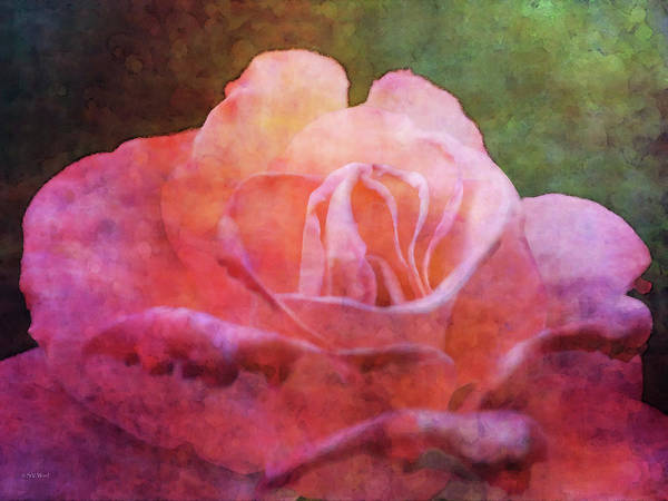 Photograph - Weathered Pink 5584 Idp_2 by Steven Ward