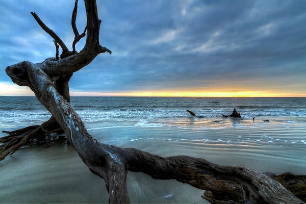 Photograph - Weathered Tree At Low Tide by Debra and Dave Vanderlaan