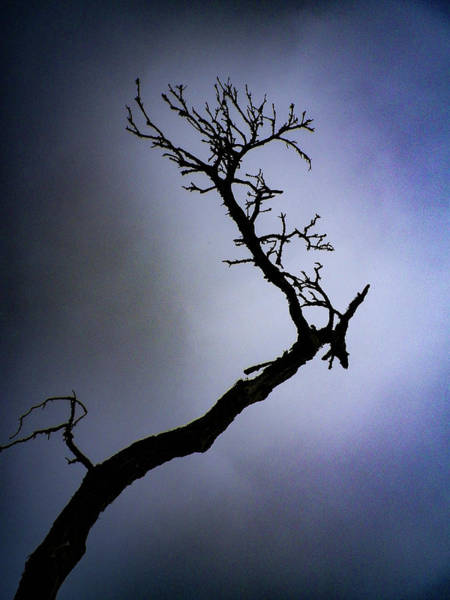Wall Art - Photograph - Weathered Tree Branch Silhouette Bodmin Moor by Richard Brookes