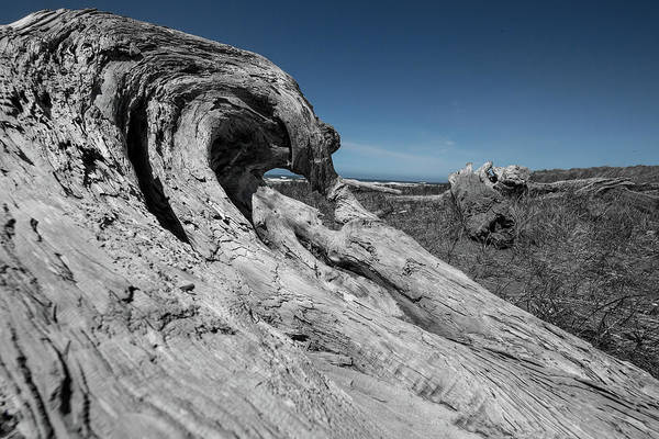 Photograph - Weathered Wood On The Beach by Bob Cournoyer