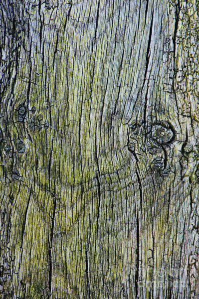Photograph - Weathered Wood  by Tim Gainey