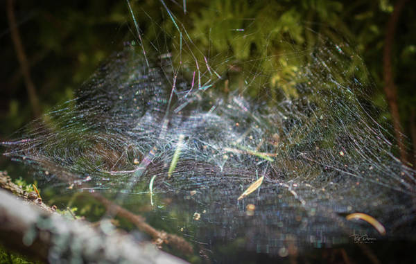 Photograph - Web Lines by Bill Posner