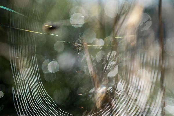 Photograph - Weborama by Robert Potts