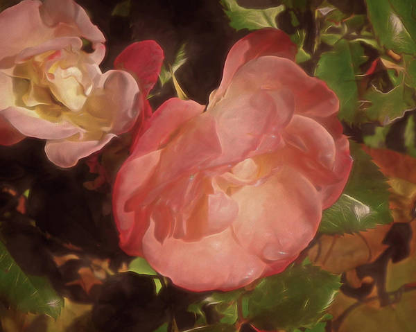 Mixed Media - Weeping Rose  by Lynda Lehmann