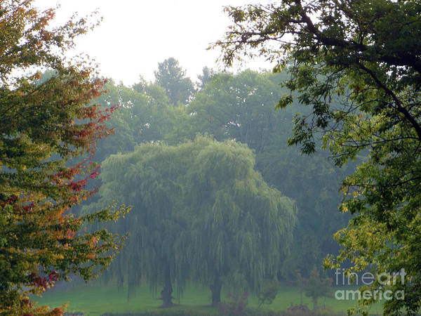 Photograph - Weeping Willow Trees by Rockin Docks