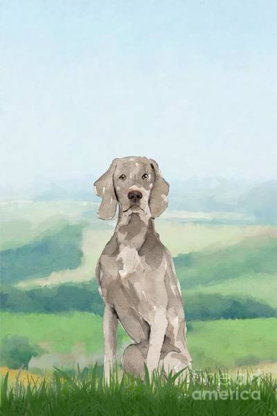 Pedigree Painting - Weimaraner by John Edwards