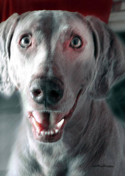 Digital Art - Weimaraner Star Portrait 2 by Miss Pet Sitter