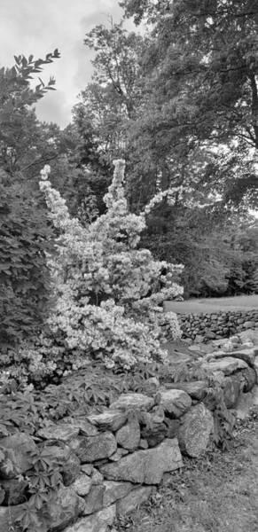 Photograph - Weir Farm Plants B W  by Rob Hans
