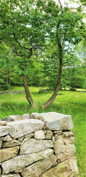 Photograph - Weir Farm Stones And Trees by Rob Hans