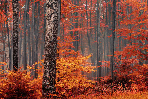 Photograph - Welcome To Orange Forest by Evgeni Dinev