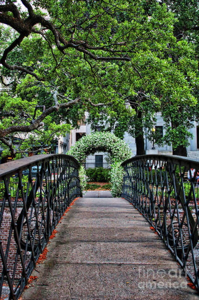 Wall Art - Photograph - Welcome To Savannah by Carol Groenen