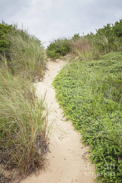 Photograph - Wellfleet Sand Dunes by Edward Fielding