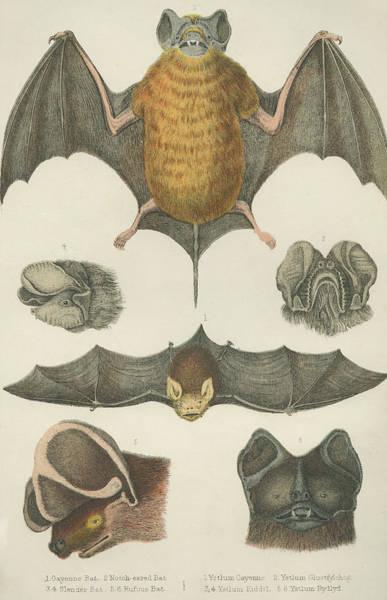 Variation Digital Art - Welsh Bats by Hulton Archive