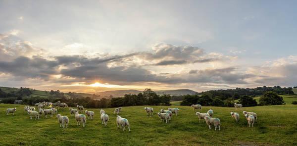 Photograph - Welsh Sheep Sunrise Landscape  by John McGraw