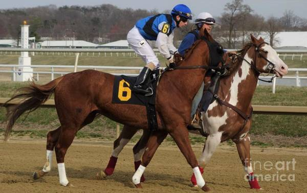Wall Art - Photograph - Wes Hamilton - Glory Hound - Laurel Park 30 by Anthony Schafer