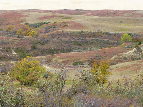 Photograph - West Dakota Buffaloberry Reverie by Cris Fulton