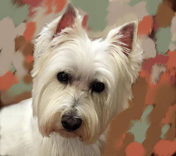 Painting - West Highland Terrier by Portraits By NC