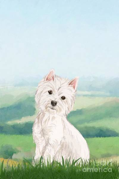 Pedigree Painting - West Highland White Terrier by John Edwards