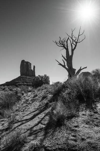 Photograph - West Mitten And Dead Juniper - Monument Valley by Alexander Kunz