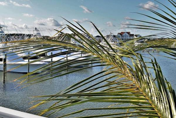 Photograph - West Ocean City Marina by Kim Bemis