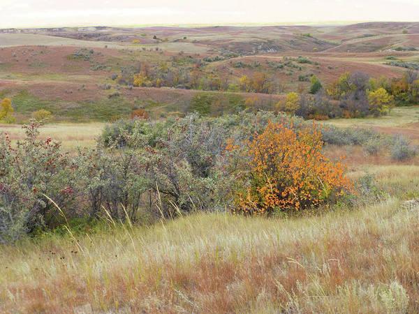 Photograph - Western Edge Buffaloberry Reverie by Cris Fulton