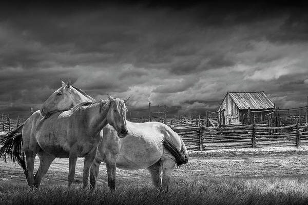 Wall Art - Photograph - Western Horses By A Corral In Black And White by Randall Nyhof