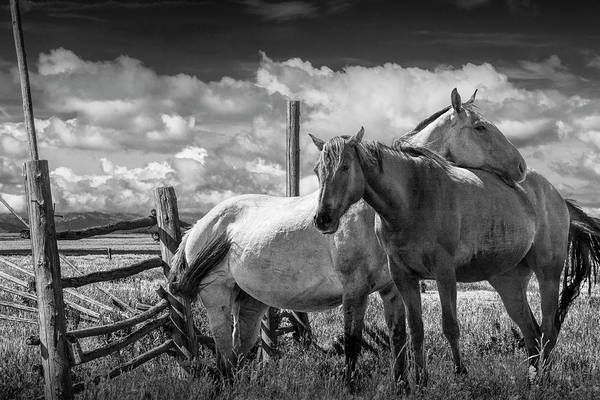 Wall Art - Photograph - Western Horses In The Pasture By A Wooden Fence In Black And White by Randall Nyhof