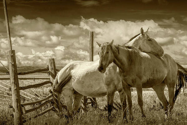 Wall Art - Photograph - Western Horses In The Pasture By A Wooden Fence In Sepia Tone by Randall Nyhof