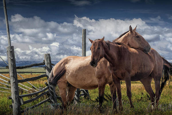 Wall Art - Photograph - Western Horses In The Pasture By A Wooden Fence by Randall Nyhof