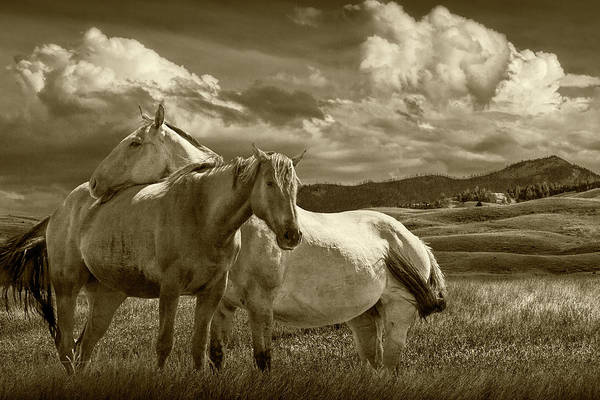 Wall Art - Photograph - Western Horses Under The Big Sky In Montana In Sepia Tone by Randall Nyhof