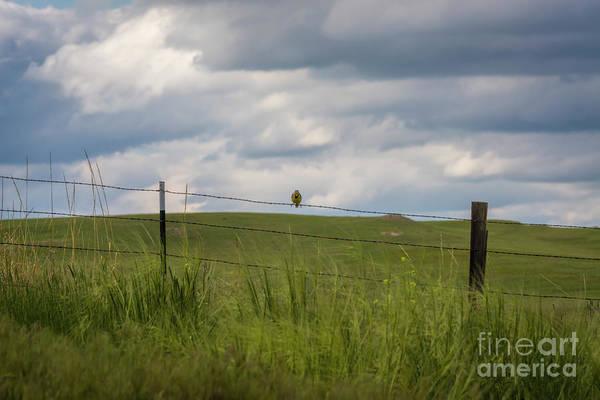 Photograph - Western Meadowlark by Jon Burch Photography