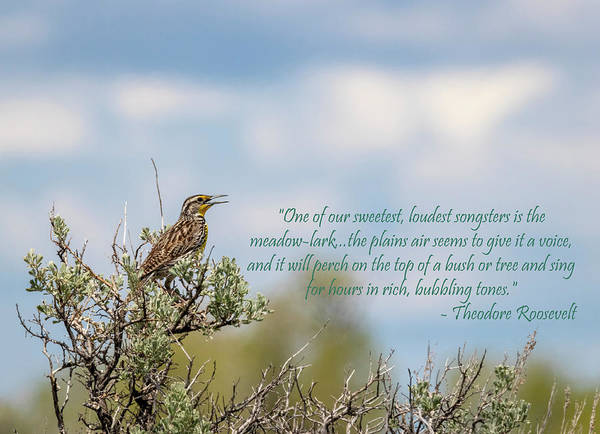 Photograph - Western Meadowlark With Quote by Michael Chatt
