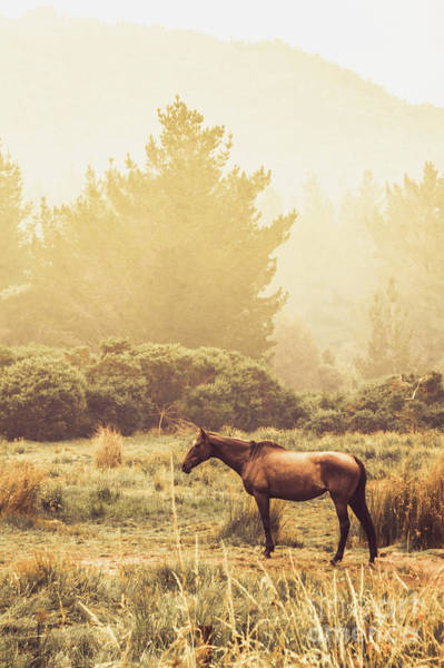Grassland Photograph - Western Ranch Horse by Jorgo Photography - Wall Art Gallery