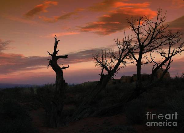 Photograph - Western Trees #2 by Marcia Lee Jones