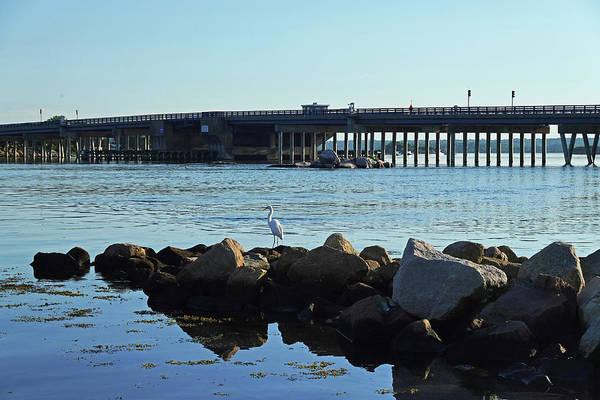 Photograph - Westport Harbor Heron Westport Ma by Toby McGuire