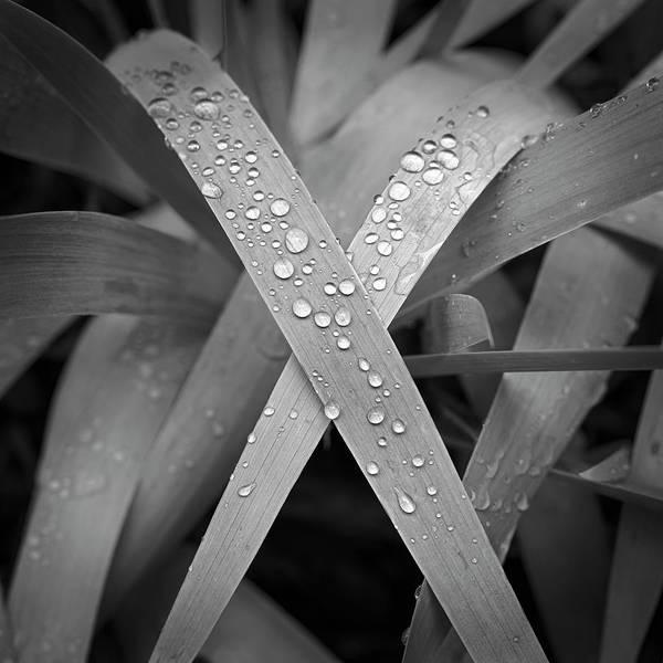 Photograph - Wet Iris by Patrick M Lynch