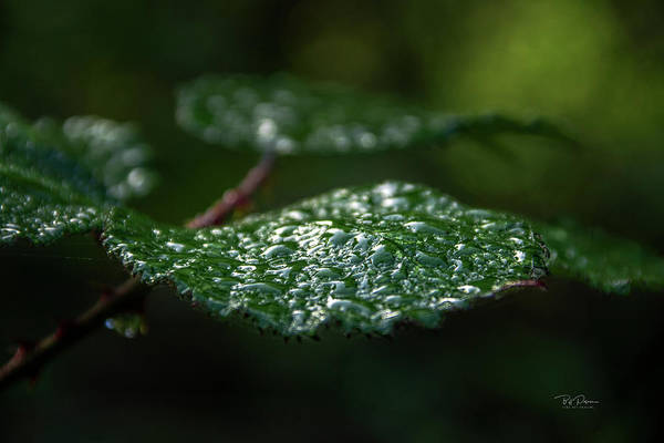 Photograph - Wet Leaf by Bill Posner