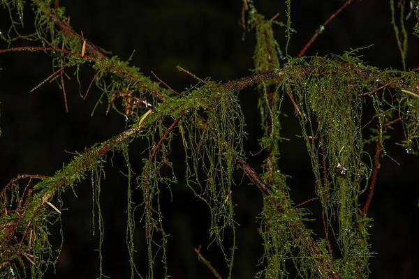 Photograph - Wet Moss by Bill Posner