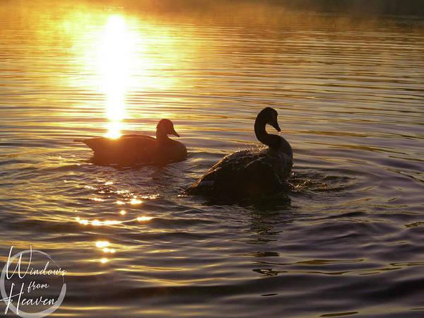 Photograph - Wfh Golden Cross Sunrise by Matthew Seufer