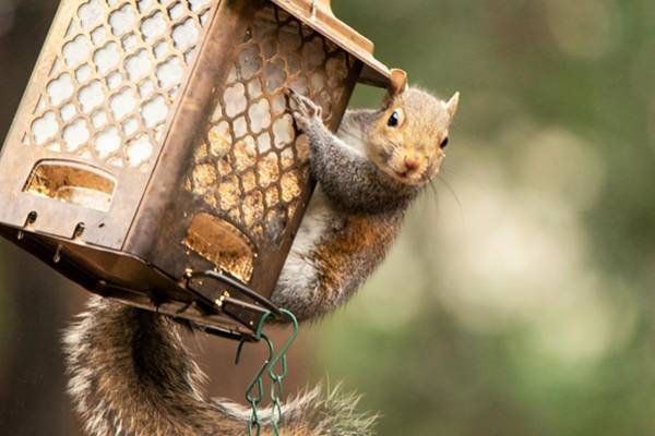 Wall Art - Photograph - Whaddya Mean It's Not A Squirrel Feeder by Mary Ann Artz