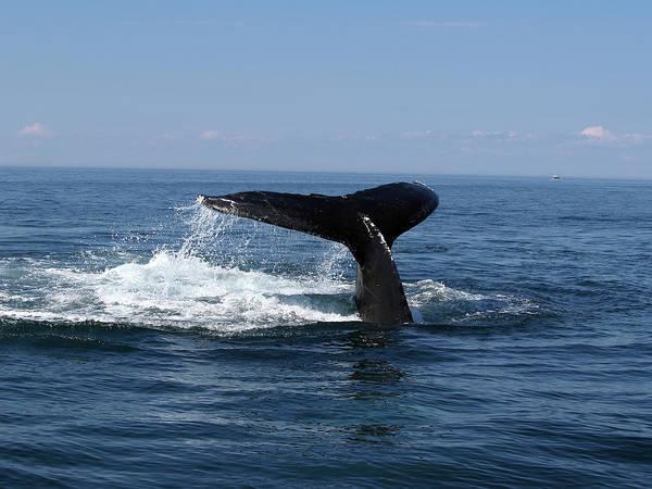 Wall Art - Photograph - Whale Diving by Edzard