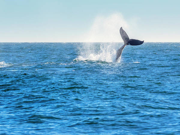 Wall Art - Photograph - Whale Tail Show by Steve Spiliotopoulos