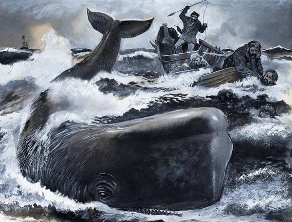 Wall Art - Painting - Whaling Scene by English School